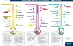 Temperatura în sectorul Automotive. Infografic