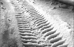 Autovehiculele neechipate de iarnă nu pot circula pe Transalpina