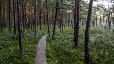 Bolt își  reduce amprenta de dioxid de carbon în Europa